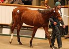 A colt by Galileo brought 500,000 guineas, highest price at the sale so far.