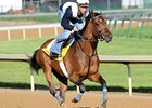 Noble's Promise to Skip Preakness; Ascot Next