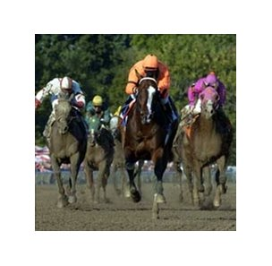 The King's Biship victory earned Lost in the Fog a ticket to the Breeders' Cup.