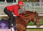 Dayatthespa works 10/31/2011 at Churchill Downs for the Breeders' Cup and draws post position 2.
