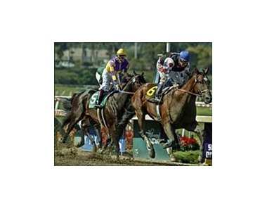 Siren Lure (6) and Alex Solis win the Triple Bend Invitational at Hollywood Park.