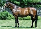 Monashee Mountain, half-brother to Mineshaft