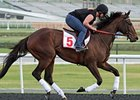 Royal Delta jogging in Dubai.