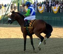 Preakness Breakdown Stuns Racing World Bloodhorse