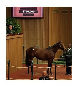 Hip #807, Giant's Causeway colt, brought $750,000 on Sept. 13 during the early portion of the Keeneland September yearling sale's fourth session.
