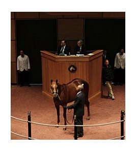 Hip 64 by Giant's Causeway was the session topper at the Fasig-Tipton Kentucky October sale.