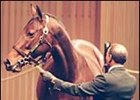 Alywow, in the sales ring at Keeneland.