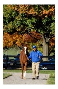 The 2007 edition of the Fasig-Tipton Kentucky November selected sale is Sunday, November 4th.