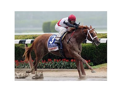 Trappe Shot won the True North by 8 1/2 lengths.