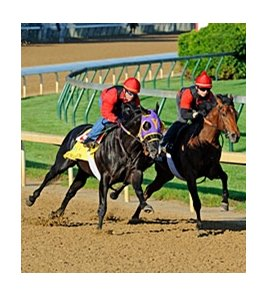 "Archarcharch (left) worked 5 furlongs in :59 2/5 at Churchill Downs Friday.<br><a target=""blank"" href=""http://www.bloodhorse.com/horse-racing/photo-store?ref=http%3A%2F%2Fpictopia.com%2Fperl%2Fgal%3Fprovider_id%3D368%26ptp_photo_id%3D9506698%26ref%3Dstory"">Order This Photo</a>"