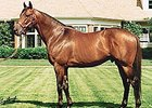 Smart Strike, the leading sire of 2007