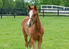 Tapability, seen here as a foal, is set to make his first start Jan. 13 at Fair Grounds Race Course