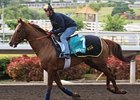 2007 Cathay Pacific Hong Kong Vase winner Doctor Dino prepping for this year's race.