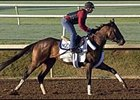 Birdstone got his first look at the main track at Lone Star Park Sunday.
