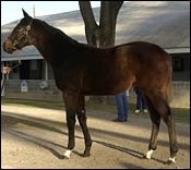 Tiznow's Weanling Full Sister Sells For $950,000 At Keeneland