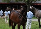 F-T New York-Bred Sale Enjoys Strong Opening