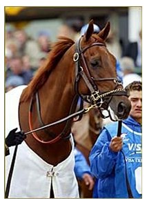 Funny Cide, to carry 123 pounds in the Haskell.