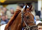 Funny Cide, on Triple Crown quest.