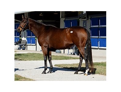 Better Than Honour sold for $14 million during the Fasig-Tipton November sale.