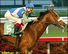 Barbaro Early Favorite for Florida Derby
