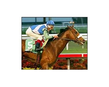 Holy Bull winner Barbaro favored in Saturday's Florida Derby.