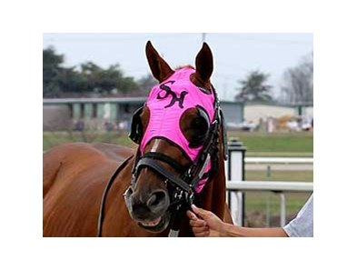 Sedgefield prior to the 2007 Lanes End Stakes at Turfway Park.