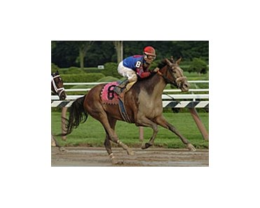 Society Selection could surprise in Nextel Distaff.