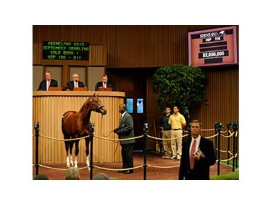 Hip 116 Distorted Humor-Angel's Nest Sold for $2,050,000 at the Keeneland Yearling Sales