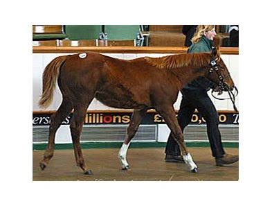 A filly from the first crop of Group 1 winner STARCRAFT topped the second day of the Tattersalls December Foal Sale.