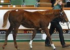Starcraft Filly Tops at Tattersalls