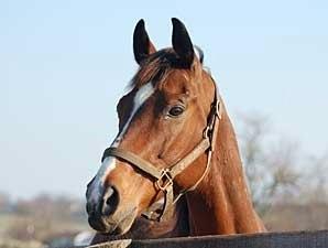 Grade 1 Winner Bonapaw Euthanized Bloodhorse