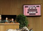 American Lady topped the session, bringing $350,000.