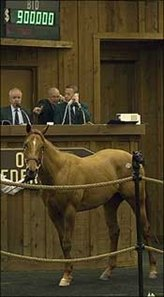 Forest Wildcat colt tops closing day at OBS.