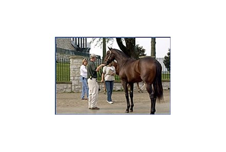 Yearling sale horse with Keeneland grandstand in the background.