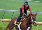 "Eskendereya will work Sunday.<br><a target=""blank"" href=""http://www.bloodhorse.com/horse-racing/photo-store?ref=http%3A%2F%2Fpictopia.com%2Fperl%2Fgal%3Fprovider_id%3D368%26ptp_photo_id%3D8923483%26ref%3Dstory"">Order This Photo</a>"