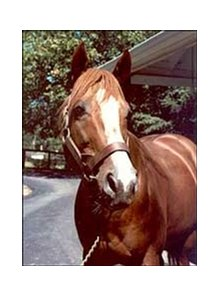 Coastal poses for a fan at Claiborne Farm in 1984.