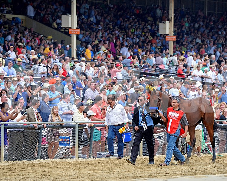 American Pharoah during the walk over before the 140th Running of the Grade I Preakness Stakes at Pimlico on May 16, 2015.