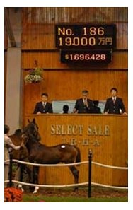 Vindication colt topped Tuesday session of JHRA sale.