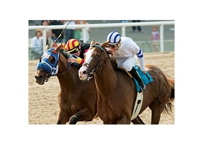 "Buzzards Bay heads the line-up for the $150,000 All American Stakes.<br><a target=""blank"" href=""http://www.bloodhorse.com/horse-racing/photo-store?ref=http%3A%2F%2Fpictopia.com%2Fperl%2Fgal%3Fprovider_id%3D368%26ptp_photo_id%3D1328549%26ref%3Dstory"">Order This Photo</a>"