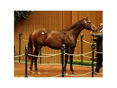 Hip 1987; colt; Macho Uno - Bag Lady Jane by Devil's Bag, was the top seller on Day 6 with a final bid of $400,000.