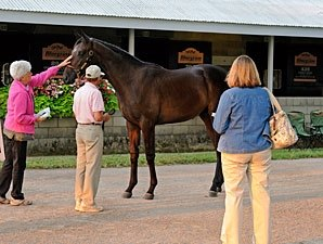 Sale Yearling Forum Held by Rood & Riddle