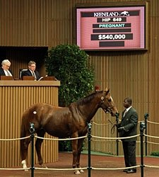 Tell It, Half to Pulpit, Brings $540,000