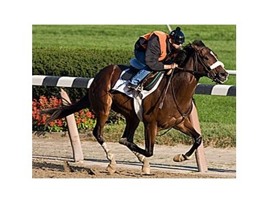 Tale of Ekati will be making his first start of 2008 in the Louisiana Derby (gr.II).
