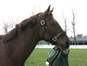 Past Derby Winners: Funny Cide (Video)