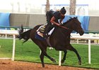 Indian Blessing shown working on March 23 in Dubai.