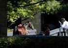Keeneland sale takes upturn on day seven.