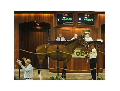 El Kingdom; Hip #383; colt; El Prado - Rabiadella by Dynaformer was the top-seller, bringing $450,000.