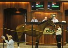 El Kingdom; Hip #383; colt; El Prado - Rabiadella by Dynaformer sold for $450,000 during the second and final session of the Ocala Breeders' Sales Co. March select sale of 2-year-olds in training.