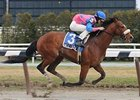 Uncle T Seven was one of four winners for jockey Ramon Dominguez on the March 29 card at Aqueduct.
