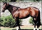 Ashford Stud stallion Tale of the Cat, led all North American sires by servicing 176 mares in 2000.